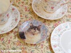 画像1: CH139 Royal Worcester Lesley Anne Ivory  レズリー・アン・アイボリー Ivory Cats ピンディッシュ  (1)